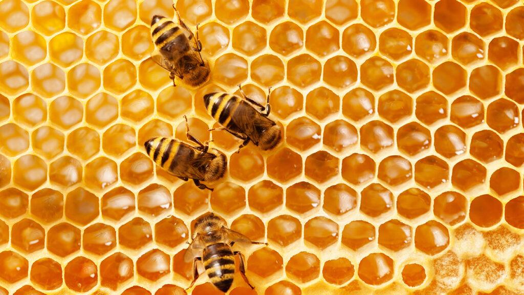 Bees Earth Week